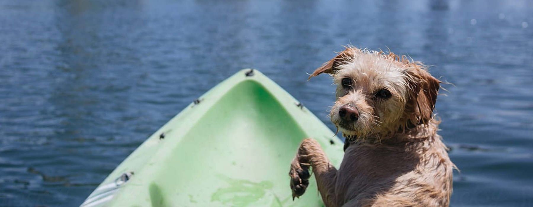 Puppy on a boat on the river